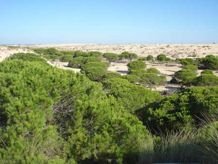 Dunas móviles de la reserva ecológica de Doñana-Huelva. Foto: Floriano Martins